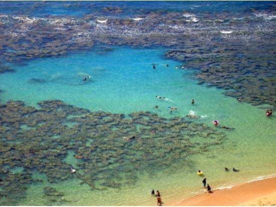 Hanuama Bays coral reefs, home to various marine life.
