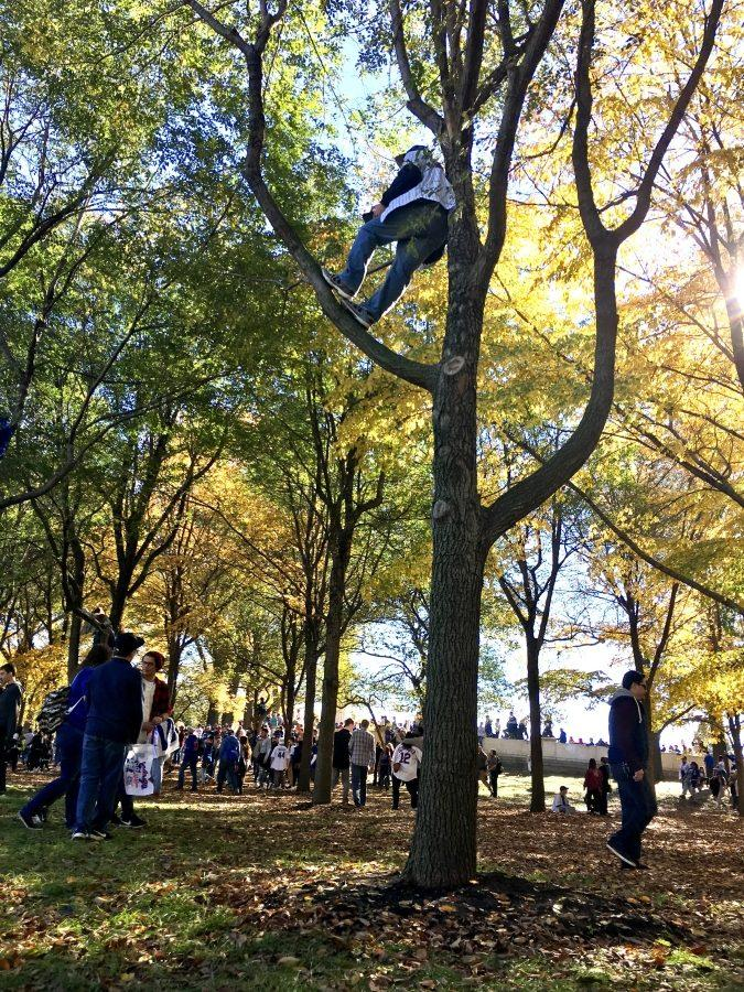 A person climbs tree at Grand Park just to see the parade