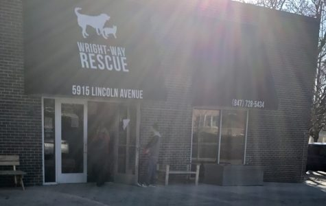 Wright-Way Rescue is hard to miss for adoptee hopefuls, as it is situated on a high traffic corner right off of a neighborhood in Morton Grove; Wright-Way has a very friendly and welcoming atmosphere.