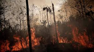 Fires torch the Amazon Rainforest