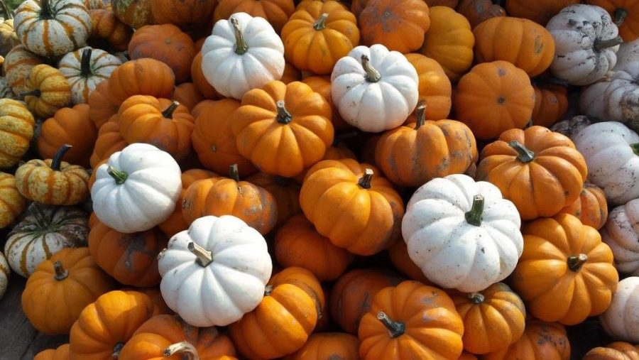 Rating+of+Local+Haunted+Houses+and+Pumpkin+Patches